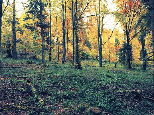 Las ten ma w sobie coś pociągającego.