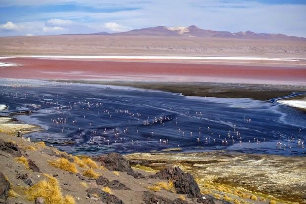 Reserva Nacional de Fauna Andina Eduardo Avaroa, Laguna Colorada