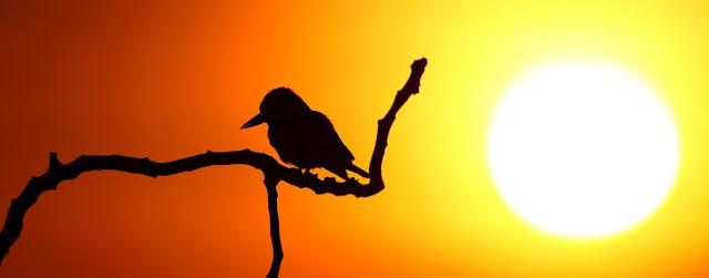 Aves sedentarias y naturaleza