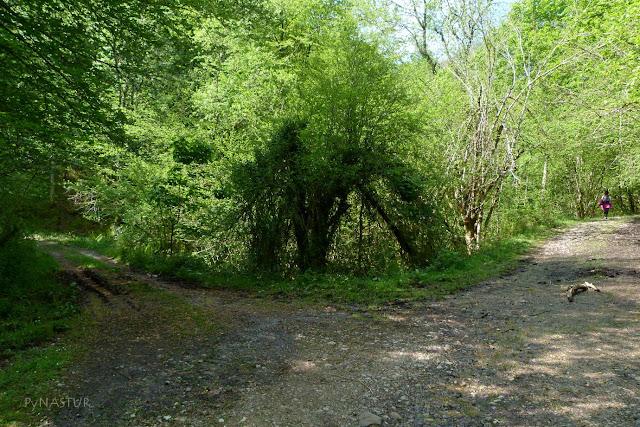 Desvío al Collao Pandemules - Parque Natural de Redes
