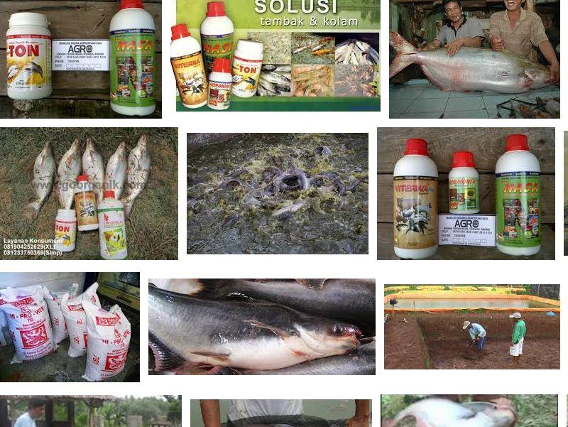 Cara Memelihara Ikan Patin