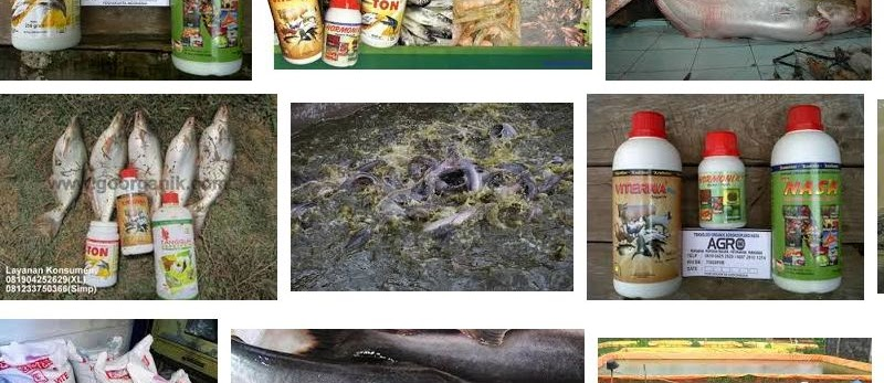 Cara Memelihara Ikan Patin Supaya Cepat Besar