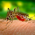 Choosing a Safe Mosquito Repellent For Infants