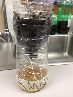 Water bottles as seed germinators!