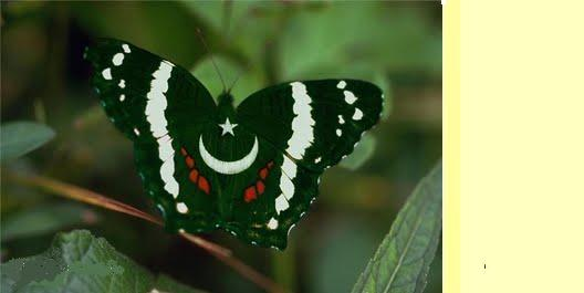 Indian Flag Butterflies: Top 10 HD Computer And Mobile Pakistani Flags Wallpapers