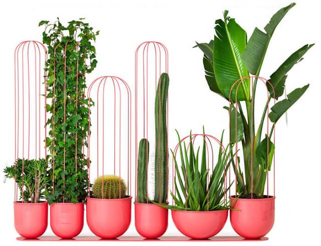 Piante e cactus ornamentali