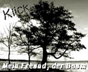 http://jahreszeitenbriefe.blogspot.de/2016/08/mein-freund-der-baum-42-baum-und-zeit-1.html