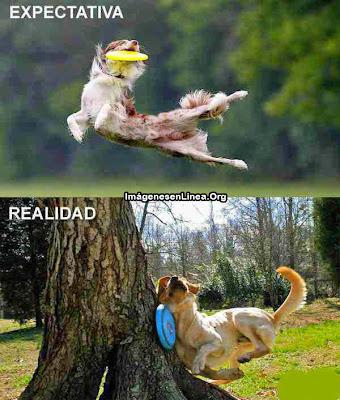 expectativa vs realidad: perro tonto