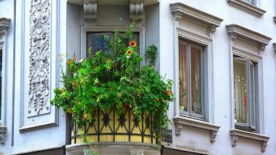 https://pixabay.com/pl/balkon-ro%C5%9Blin-sun-flower-budynku-180901/