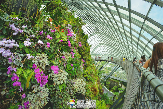 A cliff where various kind of plant growing gracefully on it | Cloud Forest @ Gardens By The Bay, Singapore