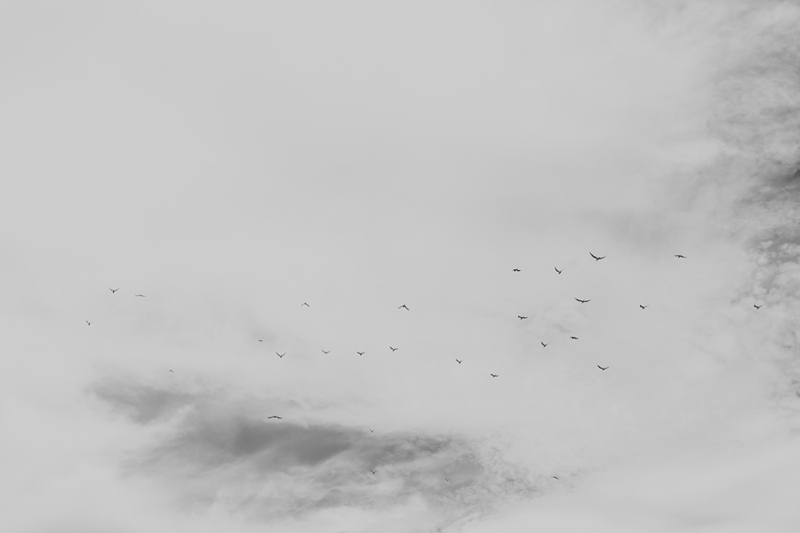 bw birds in sky