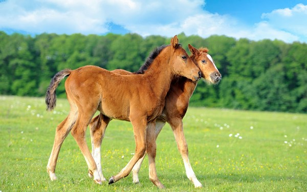 Baby Horse Wallpapers Download in HD