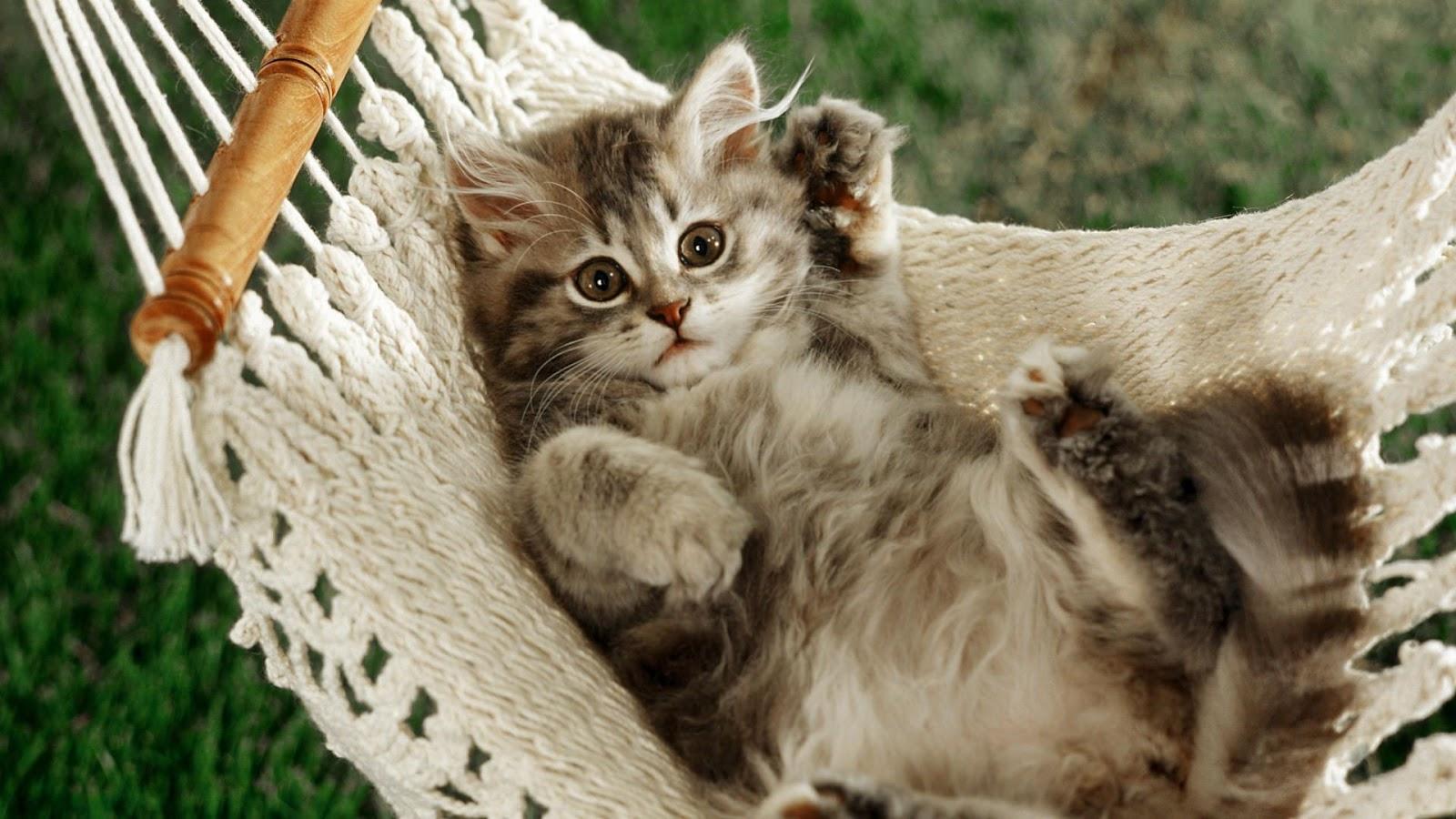 Fond décran gratuit chat