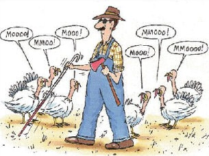 funny blind turkey farmer moo cartoon