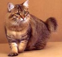 Inilah 4 Ras Kucing Yang Suka Menyembunyikan Benda Berharga Emas, Berlian dll