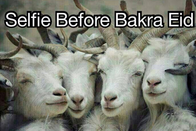 Bakra Eid Funny Pics Images Pictures 2016