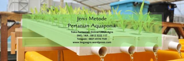 aquaponik, metode pertanian, pertanian, budidaya tanaman, lmga agro