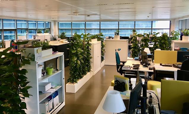 inkleden kantoor met kamerplanten en hangplanten , prijzen hangplanten kopen op aanvraag in Brussel