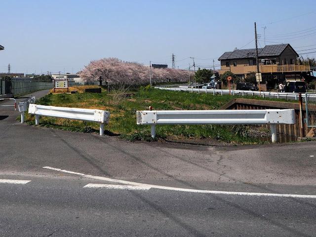 赤堀川 桜並木