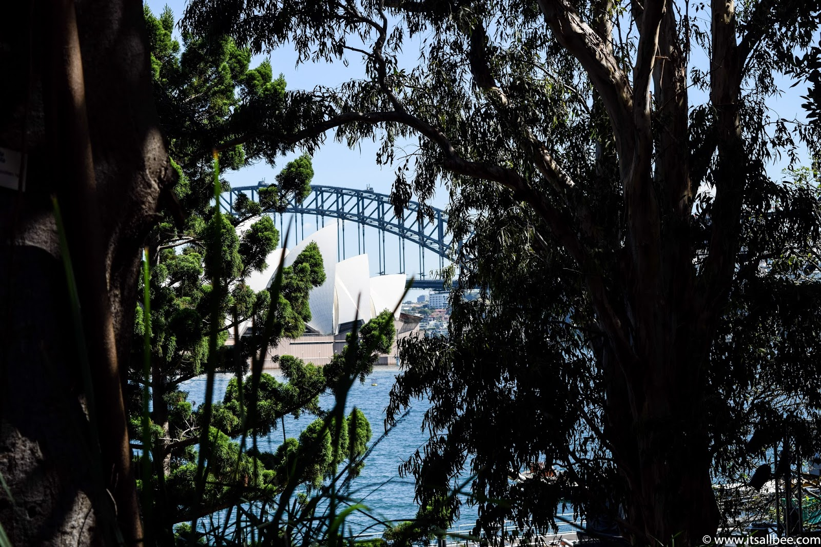Sydney Botanical Gardens + Views From Mrs Macquarie's Chair