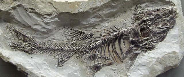 Fosiles y geologia