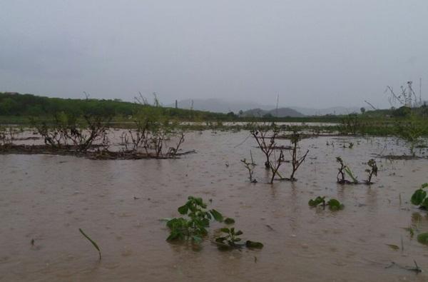 ceara-tem-chuvas-em-91-municipios