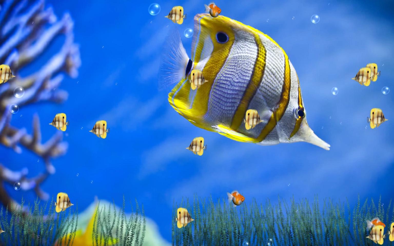 الدرس حول سطح مكتب جهازك إلى حوض ماء تسبح به الأسماك أو أشكال