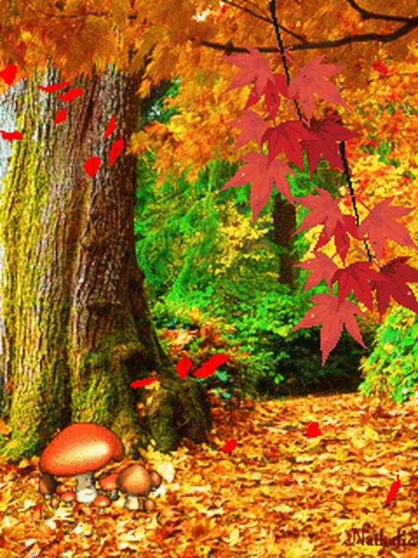 Осенний лес картинка для детей гиф