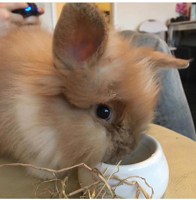 Life Update & Loosing a Pet