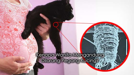Penjelasan Kenapa Wanita Mengandung Dilarang Pegang Kucing