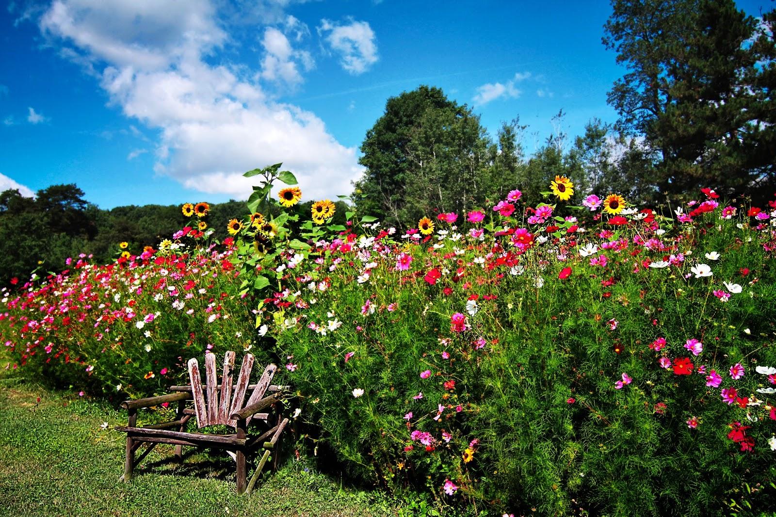 Garden bloggers fling american meadows wildflower warriors for Wild flower garden designs