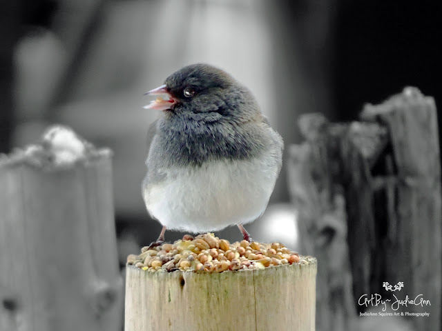 Cute Bird Photo