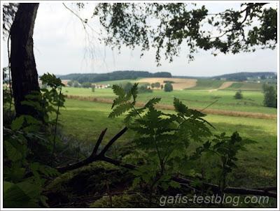 Ausblick aus dem Wald