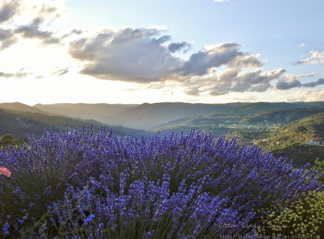 Tal in der Ardèche Frankreich mit Lavendel