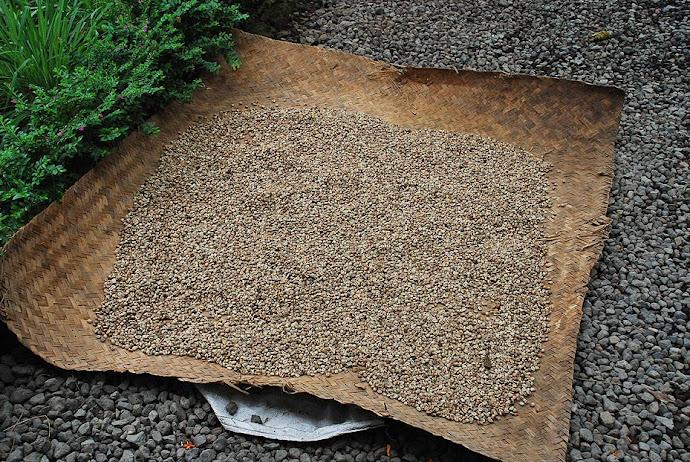 Granos de café secándose