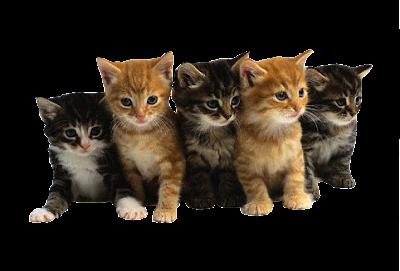 gatitos bebé