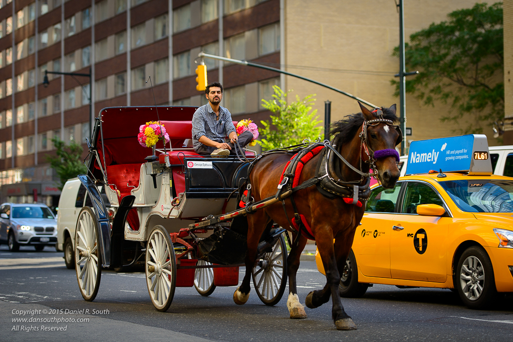 a photo of a horse and carriage in manhattan new york