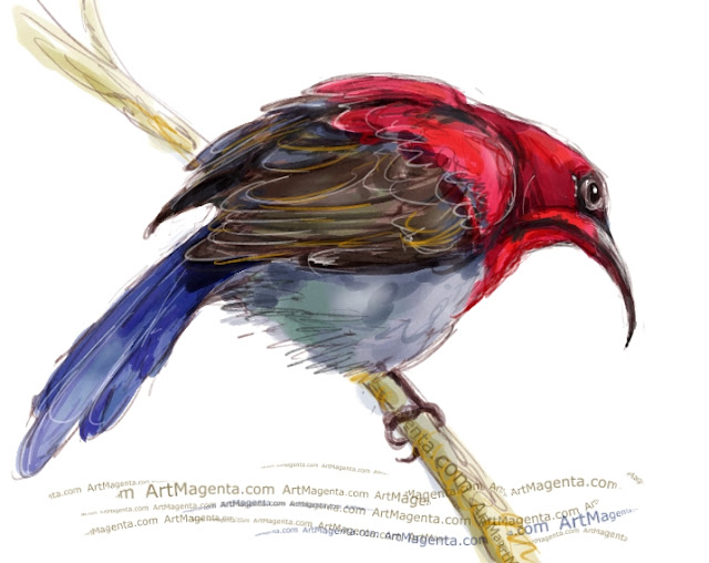 Crimson sunbird sketch painting. Bird art drawing by illustrator Artmagenta