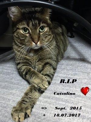 Catsolino