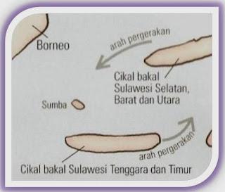 Berikut Skema terbentuknya Pulau Sulawesi