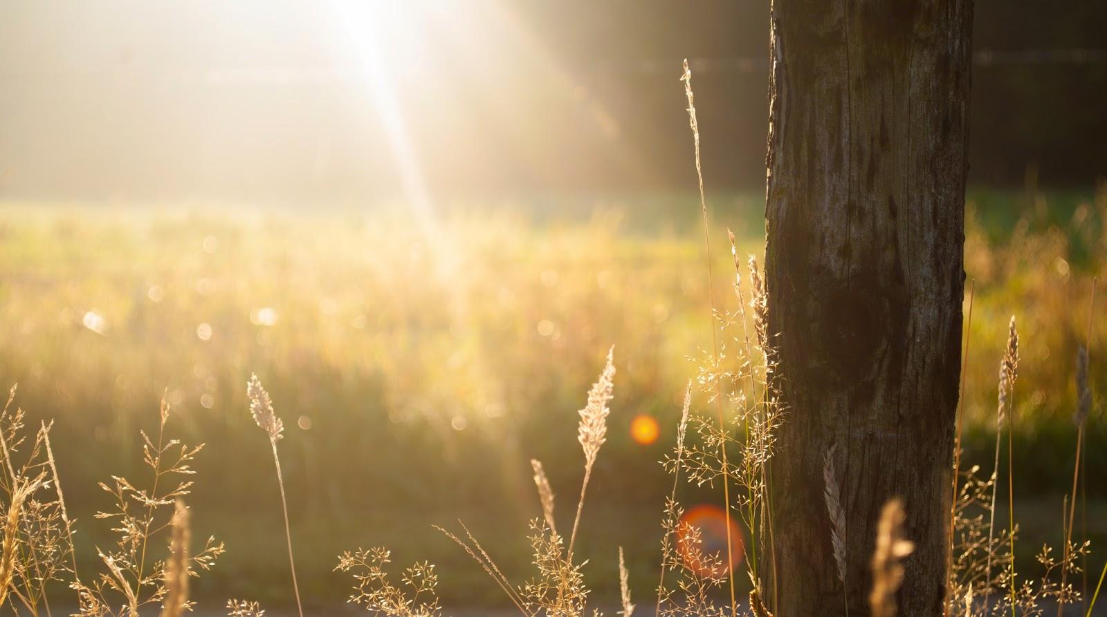 Poetry: Morning Prayer
