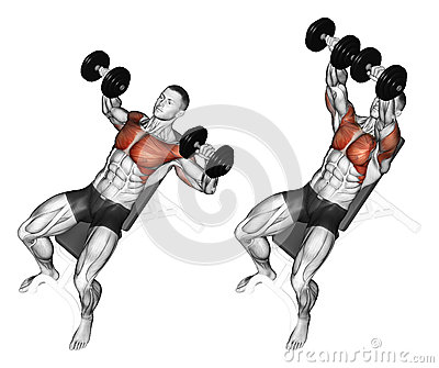 Chest Workouts: Incline Bench Press, Flat Bench Press, Decline Bench Press | How to be fit and ...