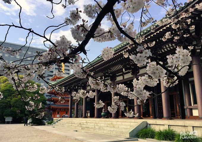 "Cherry tree ""sakura"" at Tôchô-ji temple, Fukuoka"