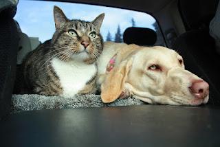 Putovanje sa kućnim ljubimcem Panvet veterinarska ambulanta Subotica