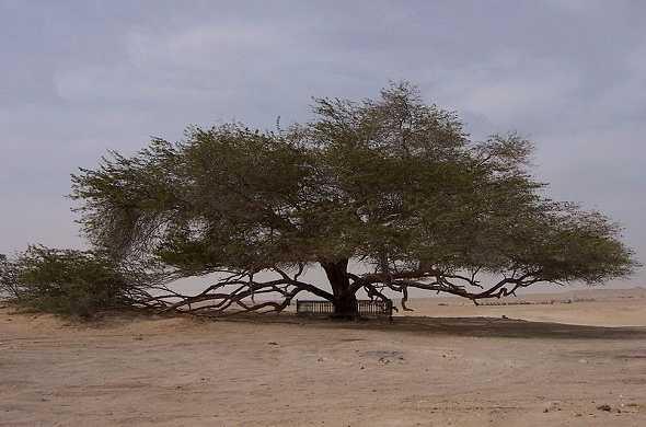 tree-of-life-bahrain-شجرة-الحياة-البحرين