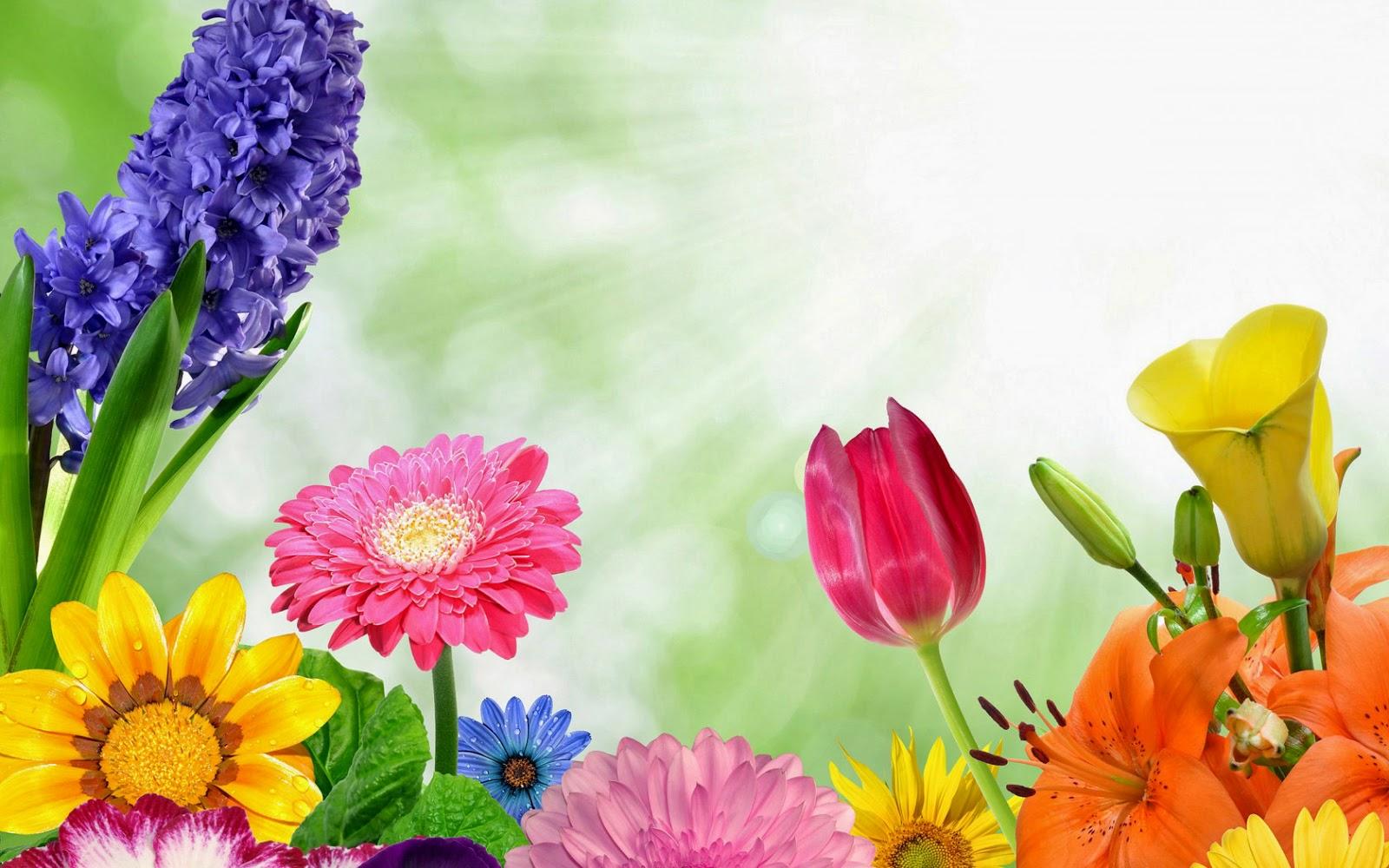 Kleurrijke lente achtergrond met bloemen