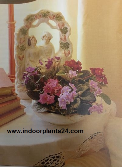 Unforgettable Indoor Plant Displays & Ideas
