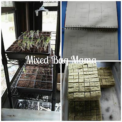 indoor seed starts