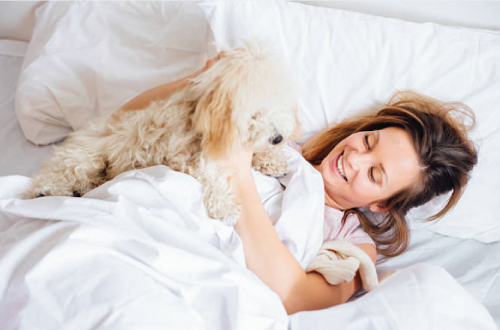 dog lying in bed with woman