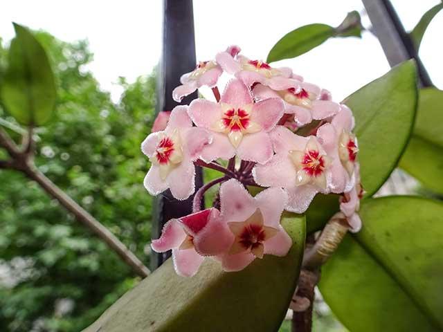 Flores de clepia con iluminación.